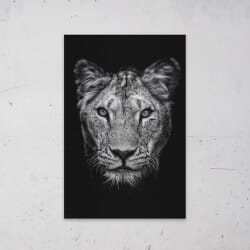 Lioness Black White on...