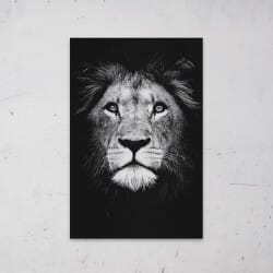 Lion Black White on Aluminum